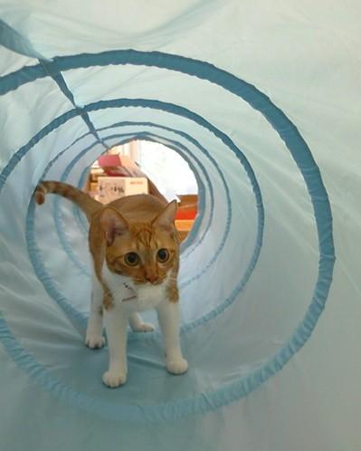 Pいさきちゃんトンネルの中5.JPG